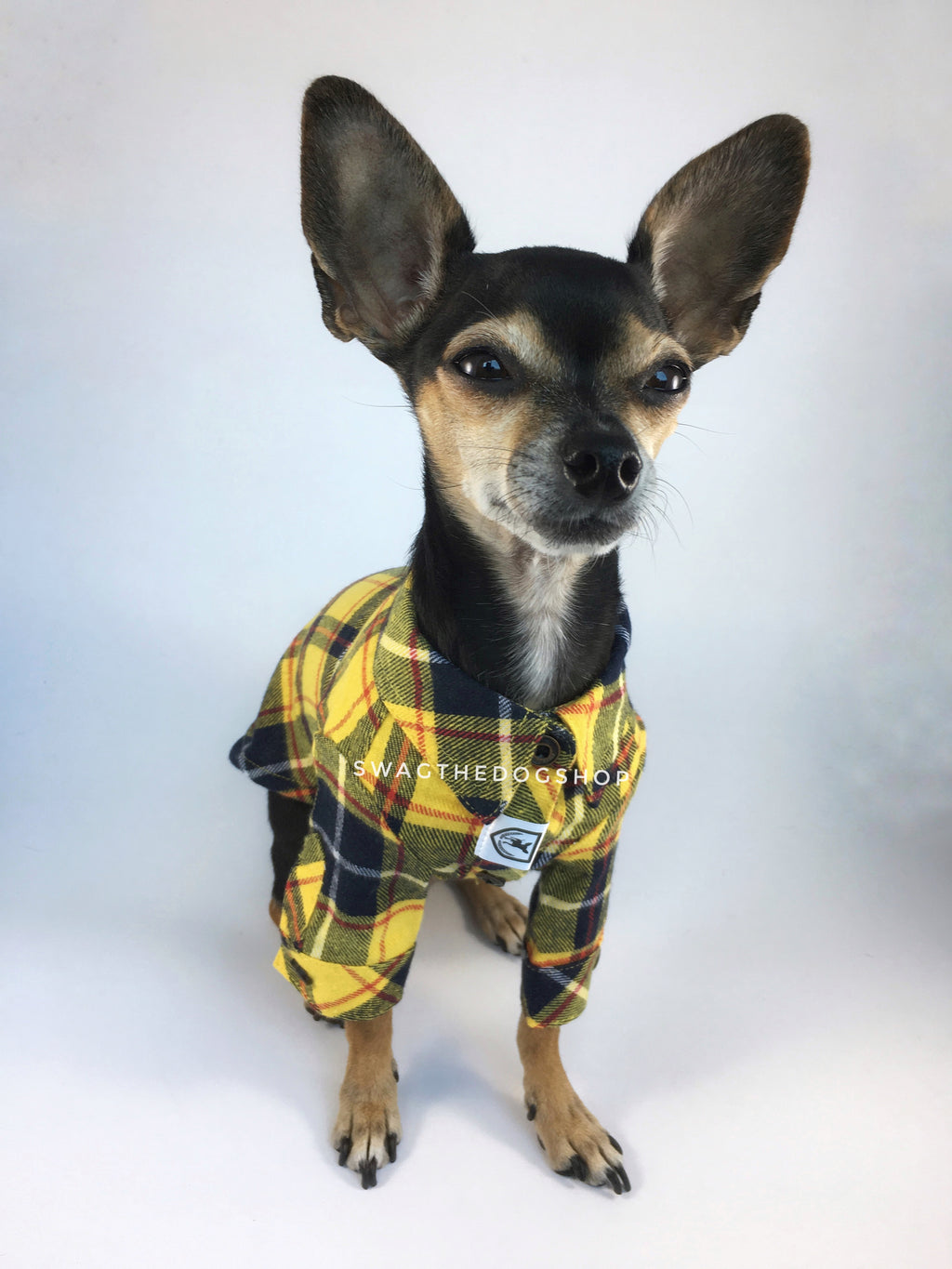 Bumble Bee Plaid Shirt - Full Front View of Cute Chihuahua Dog Wearing Shirt. Yellow and Black Plaid Shirt