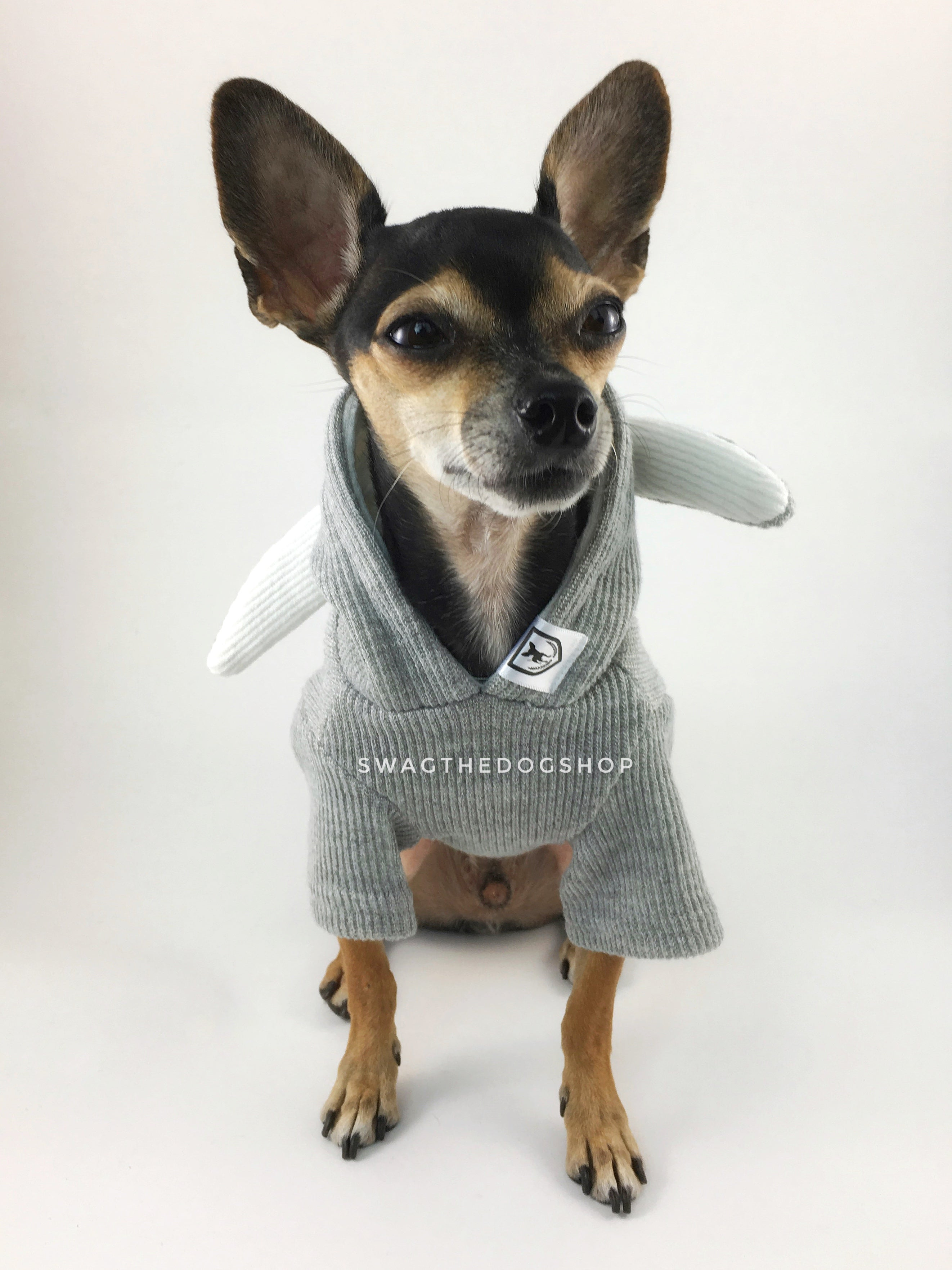 Gray Bunny Hoodie - Full Front View of Cute Chihuahua Dog Wearing Hoodie. Gray Bunny Hoodie with Pom Pom Tail
