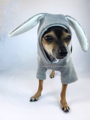 Gray Bunny Hoodie - Front View of Cute Chihuahua Dog Wearing Hoodie with Hood Up. Gray Bunny Hoodie with Pom Pom Tail