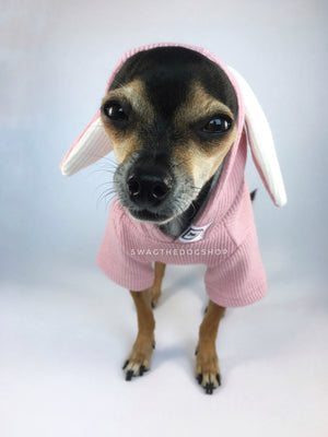 Pink Bunny Hoodie - Front View of Cute Chihuahua Dog Wearing Hoodie with Hood Up. Pink Bunny Hoodie with Pom Pom Tail