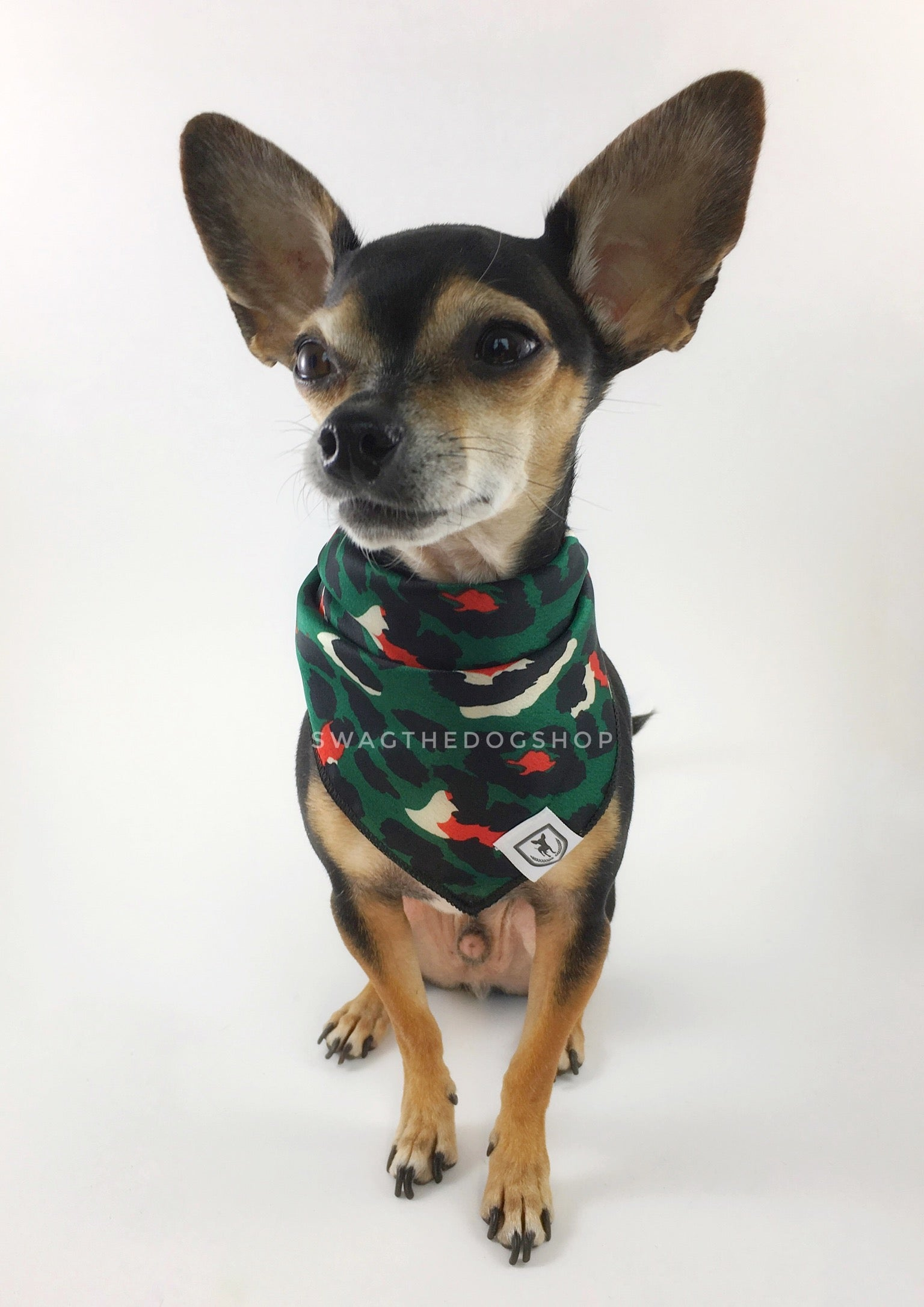 Fierce Forest Green with Red Swagdana Scarf - Full Frontal View of Cute Chihuahua Wearing Swagdana Scarf as Bandana. Dog Bandana. Dog Scarf