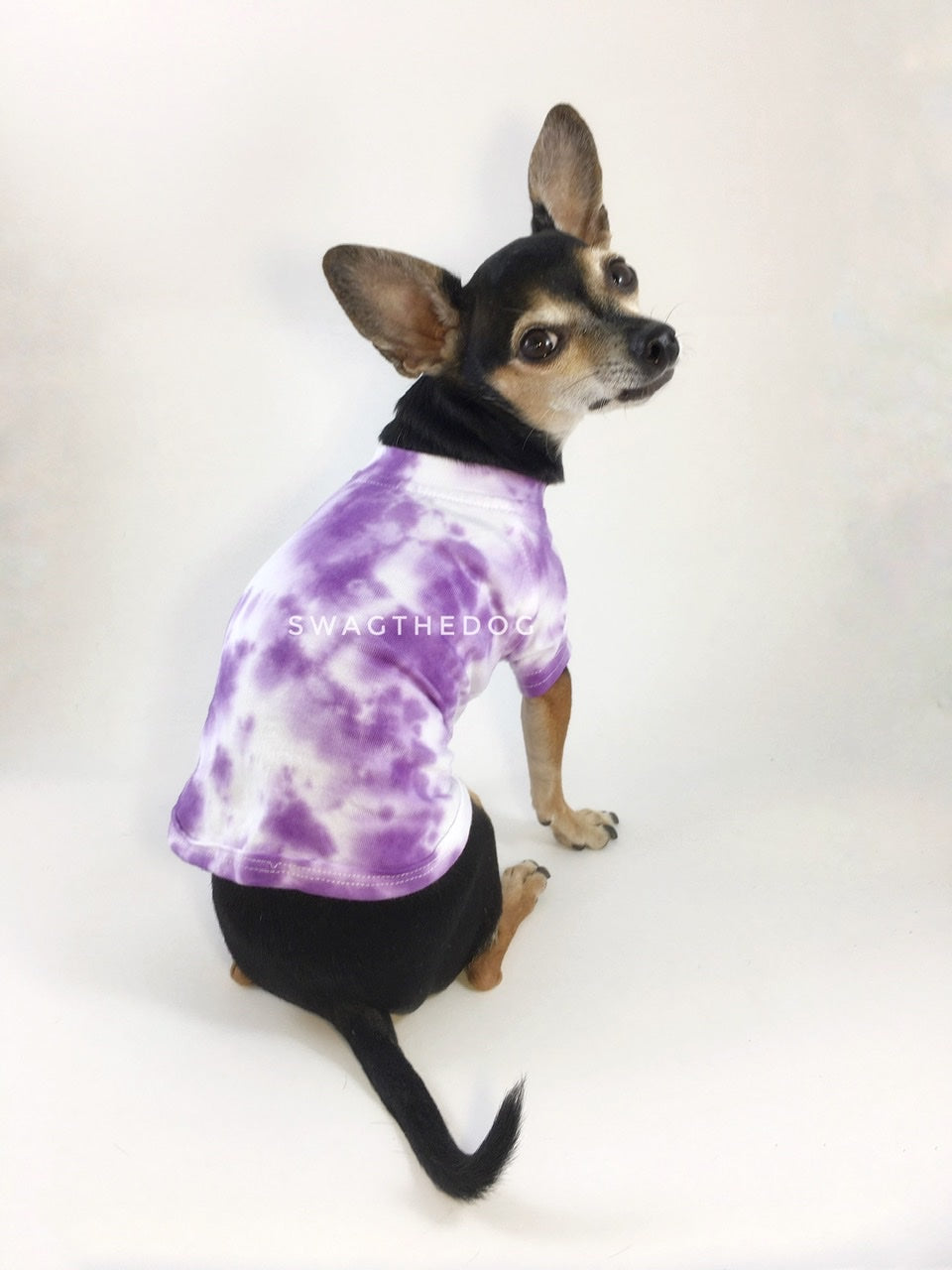 Swagadelic Purple Tie Dye Tee - Cute Chihuahua named Hugo in sitting position with his back towards the camera and looking back, wearing the hand tie-dyed tee with Purple