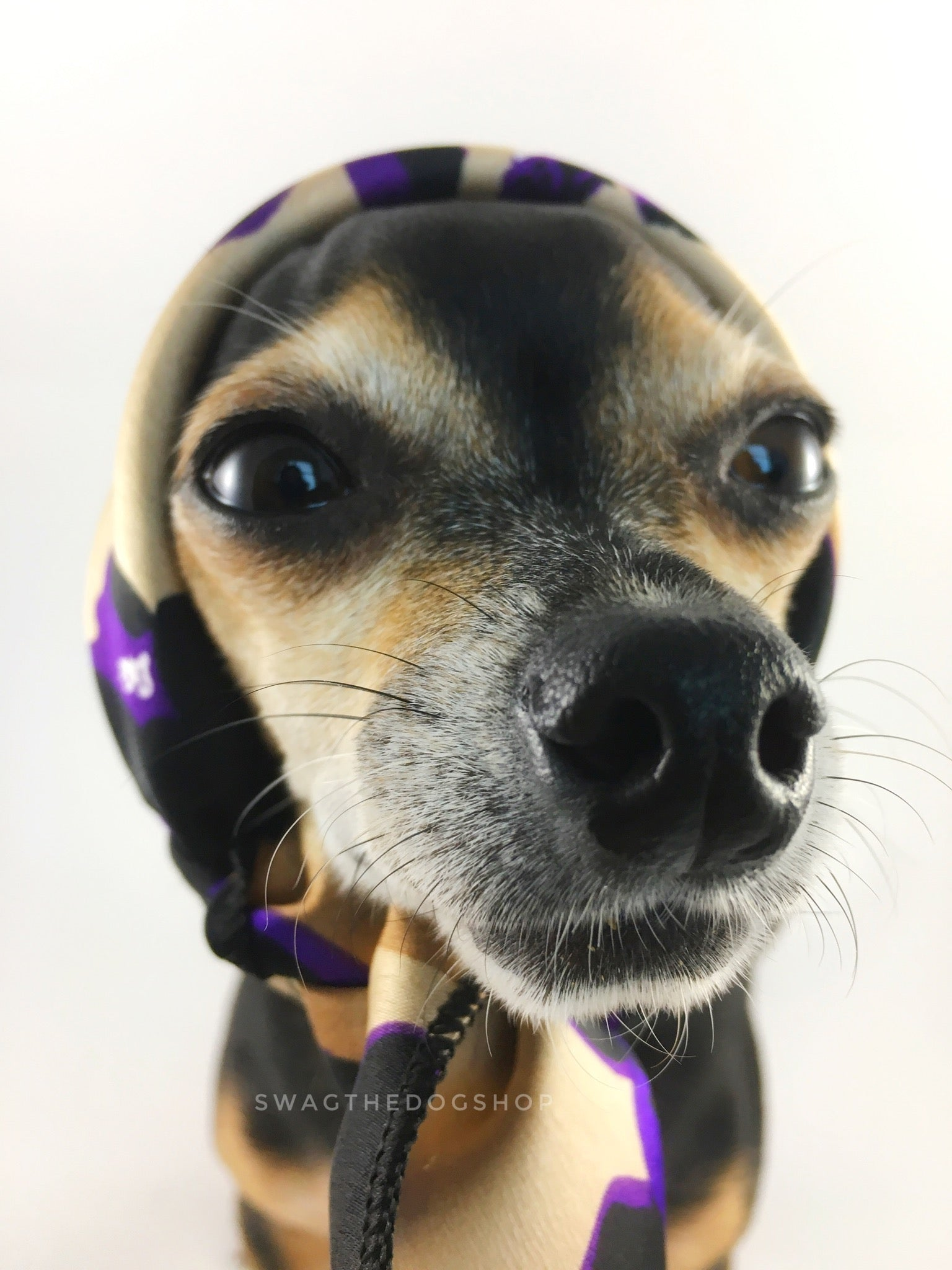 Fierce Beige with Purple Swagdana Scarf - Bust of Cute Chihuahua Wearing Swagdana Scarf as Headscarf. Dog Bandana. Dog Scarf