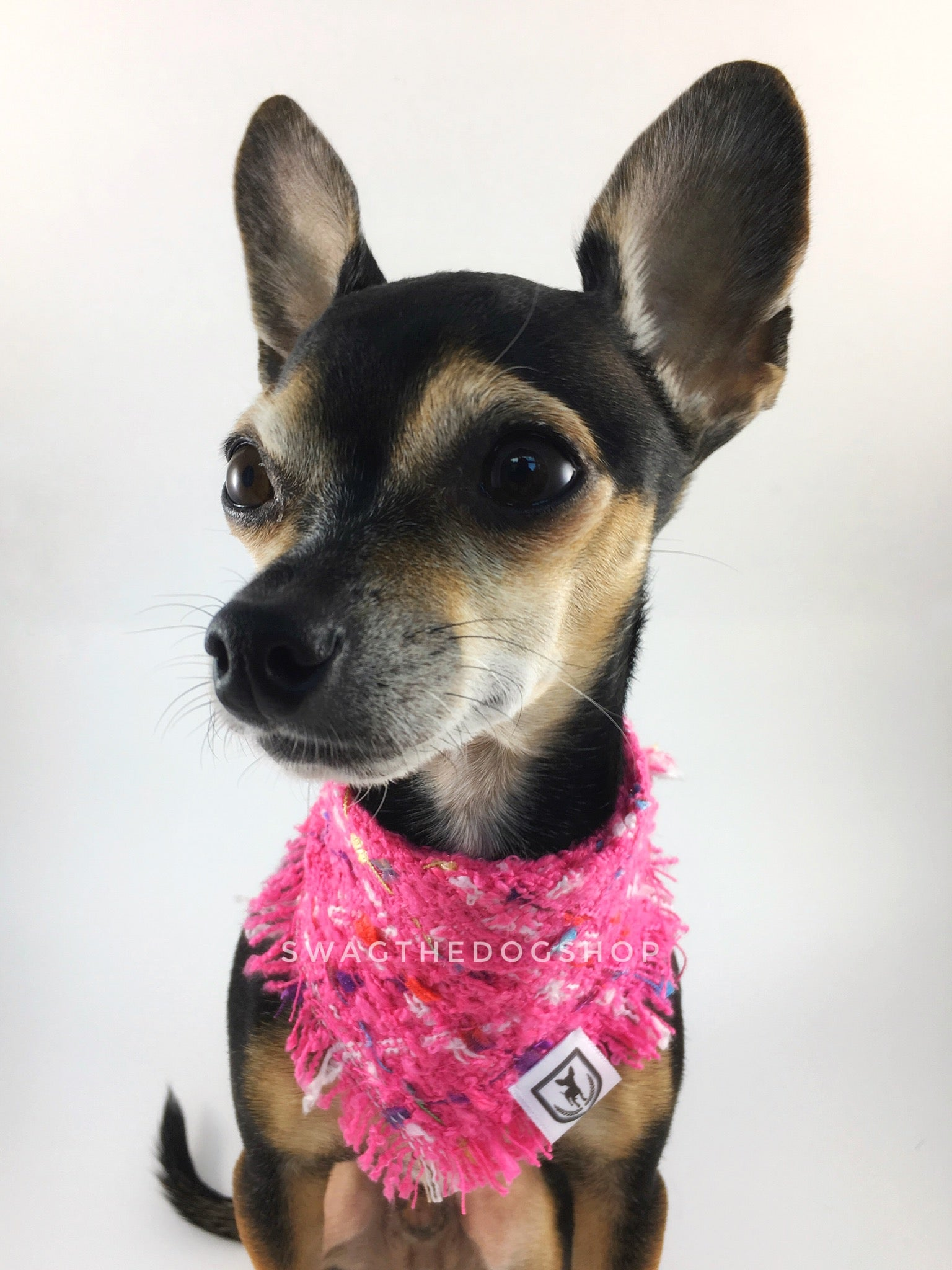 Hot Pink Tweed Swagdana with Frayed Edges - Bust of Cute Chihuahua Wearing Swagdana. Dog Bandana. Dog Scarf.