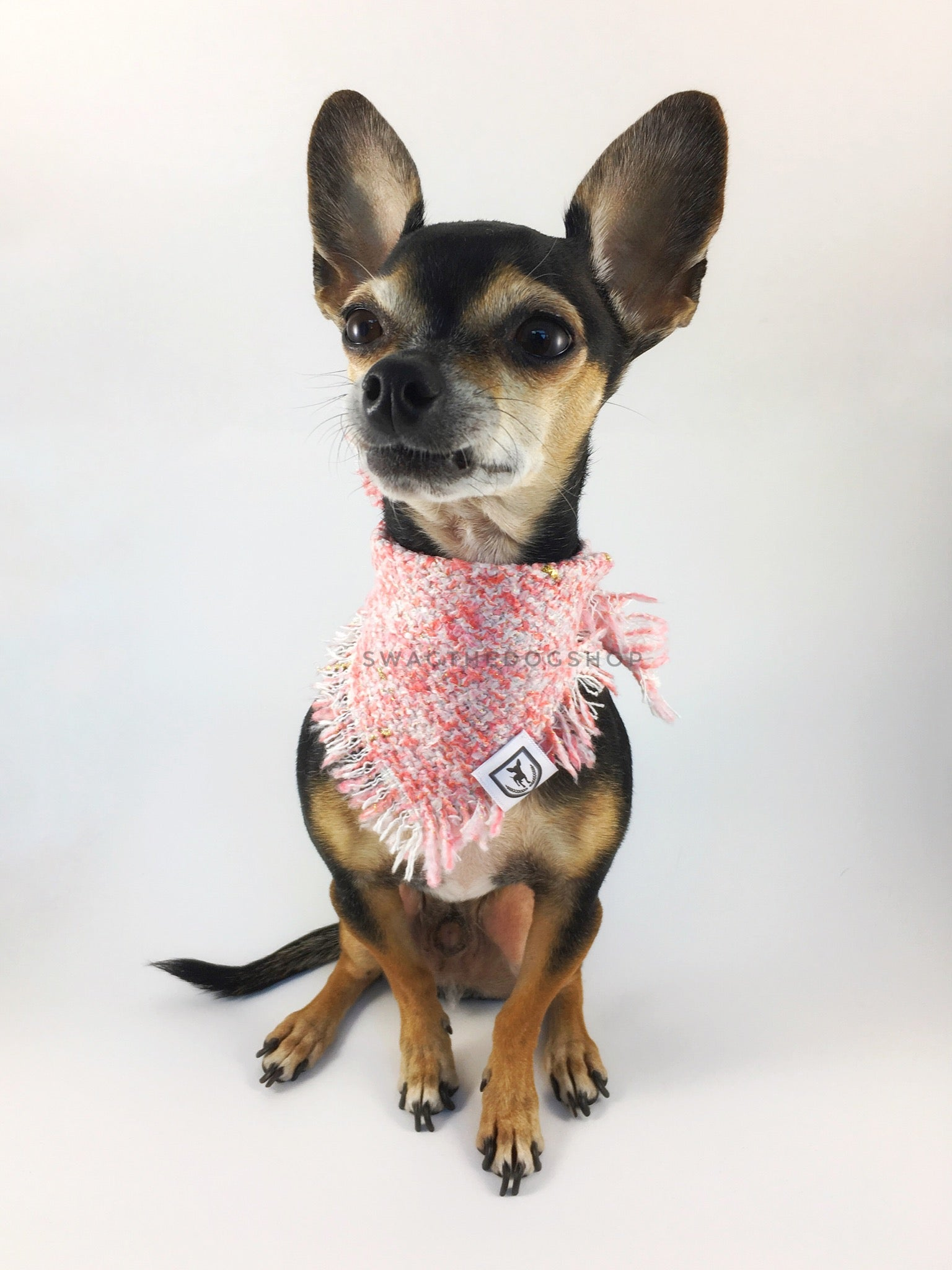 Fairy Pink Tweed Swagdana with Frayed Edges - Full Front View of Cute Chihuahua Wearing Swagdana. Dog Bandana. Dog Scarf