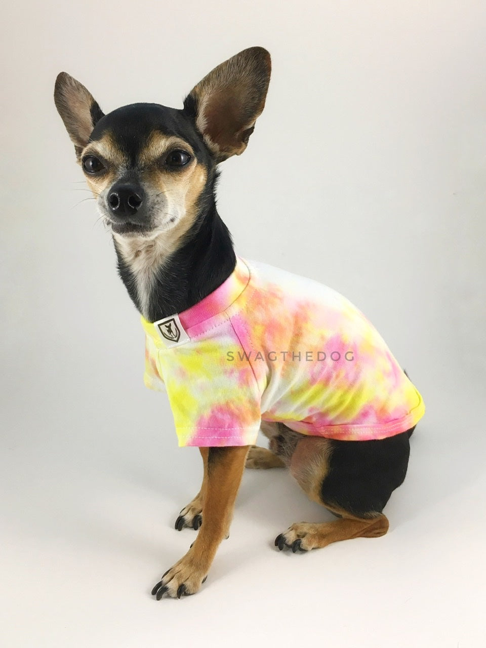 Swagadelic Cotton Candy Tie Dye Tee - Side profile of cute Chihuahua named Hugo in sitting position. wearing the hand tie-dyed tee with Pink and Yellow