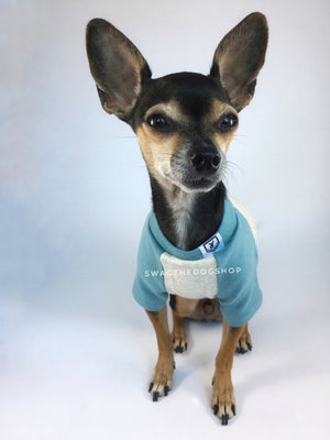 Baby Blue and Gray Centerfield Tees T-Shirt - Cute Chihuahua Dog Wearing T-Shirt Full Front View. Baby Blue and Gray T-Shirt