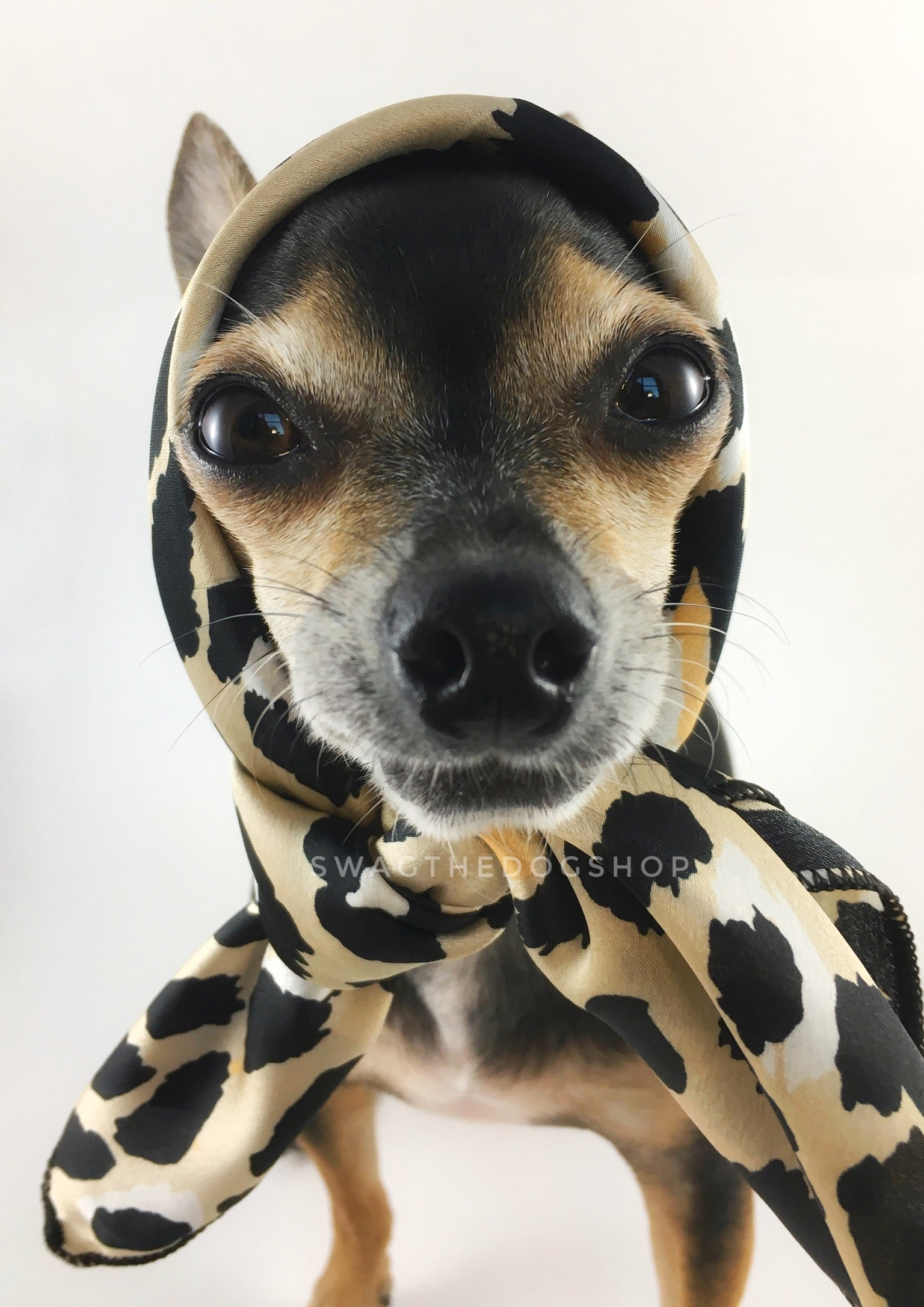 Fierce Beige with Yellow Swagdana Scarf - Bust of Cute Chihuahua Wearing Swagdana Scarf as Headscarf. Dog Bandana. Dog Scarf