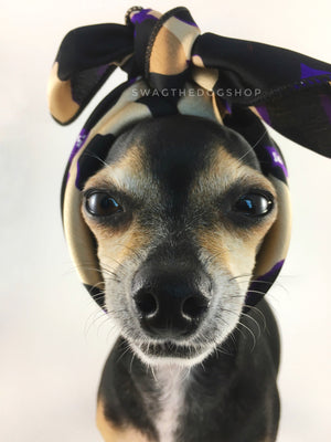 Fierce Beige with Purple Swagdana Scarf - Bust of Cute Chihuahua Wearing Swagdana Scarf as Headband. Dog Bandana. Dog Scarf