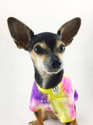 Swagadelic Spiral Tie Dye Tee - Close-up frontal of cute Chihuahua named Hugo in sitting position, wearing the hand tie-dyed tee with Pink, Yellow and Purple