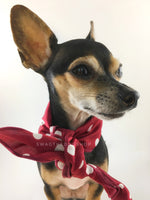 Polka Dot Burgundy Swagdana Scarf - Bust of Cute Chihuahua Wearing Swagdana Scarf as Neck Scarf. Dog Bandana. Dog Scarf.
