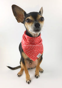 Polka Itty Bitty Coral Swagdana Scarf - Full Frontal View of Cute Chihuahua Wearing Swagdana Scarf as Bandana. Dog Bandana. Dog Scarf.