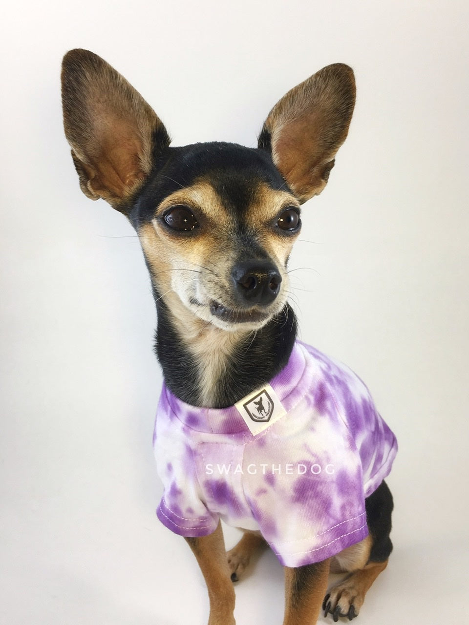 Swagadelic Purple Tie Dye Tee - Close-up frontal of cute Chihuahua named Hugo in sitting position, wearing the hand tie-dyed tee with Purple