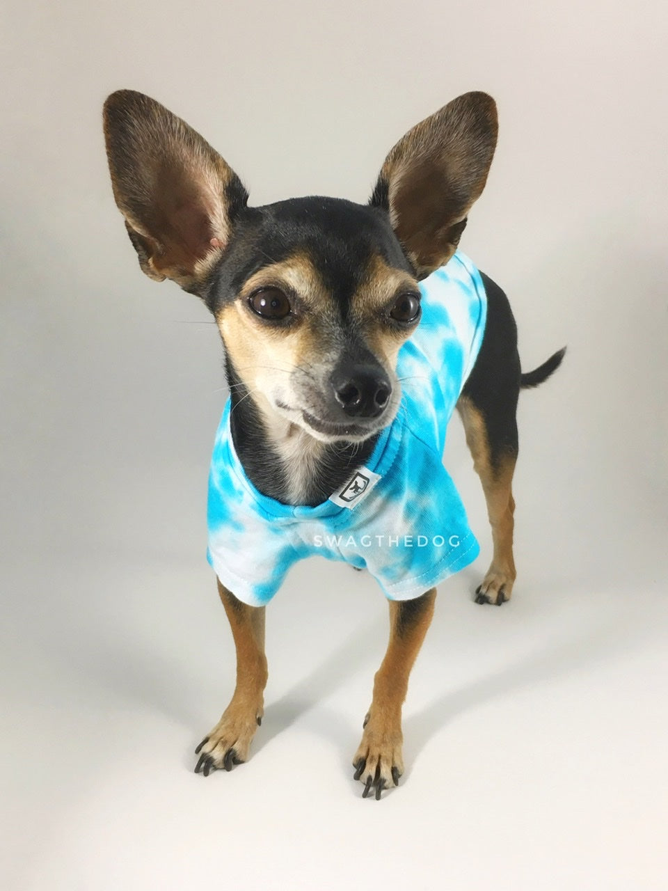 Swagadelic Sky Blue Tie Dye Tee - Frontal of cute Chihuahua named Hugo in standing position, wearing the hand tie-dyed tee with Sky Blue