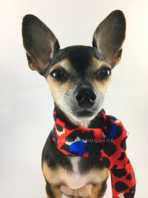 Fierce Vibrant Red with Blue Swagdana Scarf - Bust of Cute Chihuahua Wearing Swagdana Scarf as Neckerchief. Dog Bandana. Dog Scarf