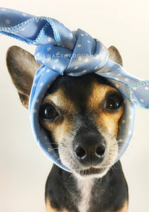 Polka Itty Bitty Powder Blue Swagdana Scarf - Bust of Cute Chihuahua Wearing Swagdana Scarf as Headband. Dog Bandana. Dog Scarf.