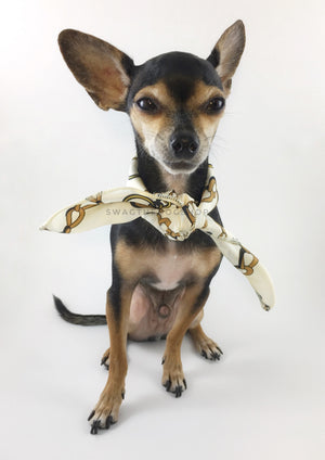 24K Vanilla Gold Swagdana Scarf - Full Front View of Cute Chihuahua Wearing Swagdana Scarf as Neck Scarf. Dog Bandana. Dog Scarf