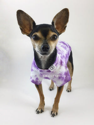 Swagadelic Purple Tie Dye Tee - Frontal of Cute Chihuahua named Hugo in standing position, wearing the hand tie-dyed tee with Purple