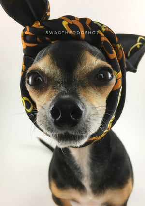 24K Black Gold Swagdana Scarf - Bust of Cute Chihuahua Wearing Swagdana Scarf as Headband. Dog Bandana. Dog Scarf