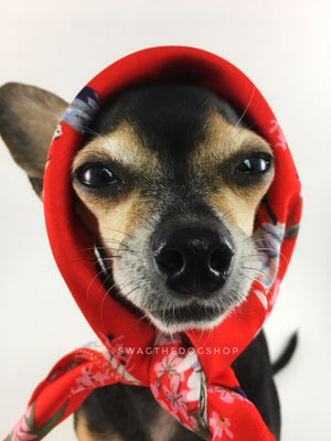Red Wild Flowers Swagdana Scarf - Bust of Cute Chihuahua Wearing Swagdana Scarf as Headscarf. Dog Bandana. Dog Scarf.