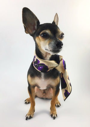 Fierce Beige with Purple Swagdana Scarf - Full Frontal View of Cute Chihuahua Wearing Swagdana Scarf as Neckerchief. Dog Bandana. Dog Scarf