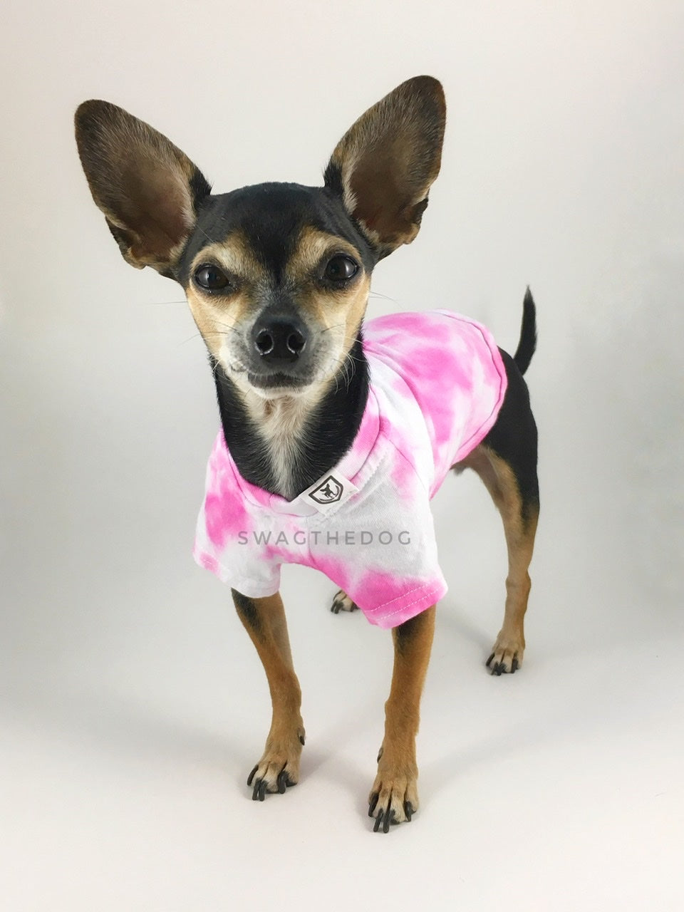 Swagadelic Pink Tie Dye Tee - Frontal of cute Chihuahua named Hugo in standing position, wearing the hand tie-dyed tee with Pink