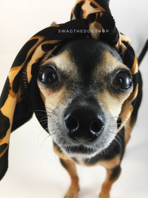 Leopard Ivory Cream Swagdana Scarf - Bust of Cute Chihuahua Wearing Swagdana Scarf as Headband. Dog Bandana. Dog Scarf.