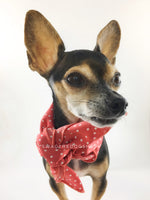 Polka Itty Bitty Coral Swagdana Scarf - Bust of Cute Chihuahua Wearing Swagdana Scarf as Neck Scarf. Dog Bandana. Dog Scarf.