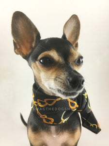 24K Black Gold Swagdana Scarf - Bust of Cute Chihuahua Wearing Swagdana Scarf as Neckerchief. Dog Bandana. Dog Scarf
