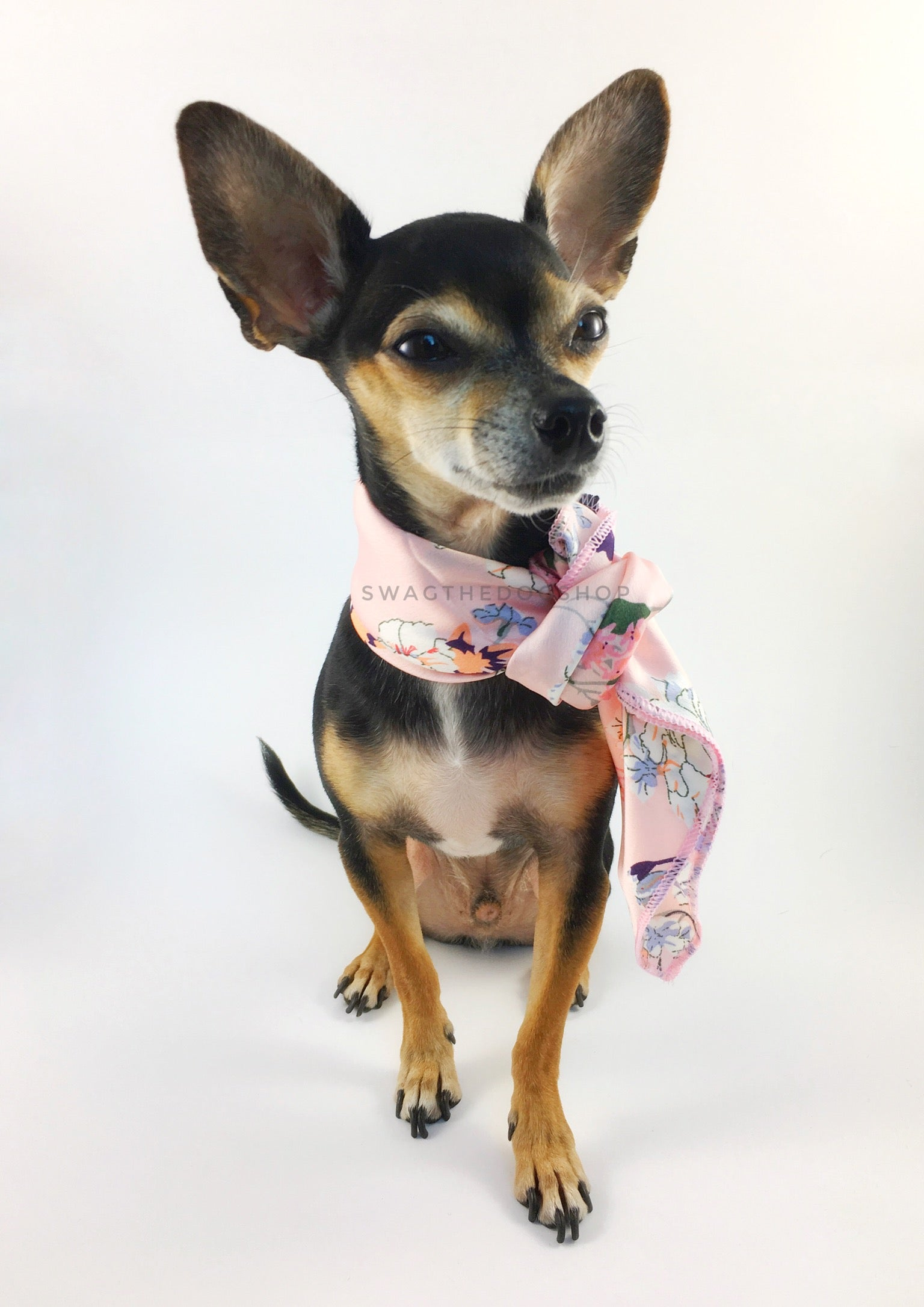 Pink Wild Flower Swagdana Scarf - Full Front View of Cute Chihuahua Wearing Swagdana Scarf as Neckerchief. Dog Bandana. Dog Scarf.