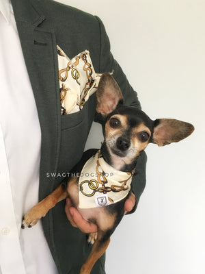 24K Vanilla Gold Swagdana Scarf - Man using Swagdana Scarf as Pocket Square in his Sports Jacket and Hugo, The Chihuahua Wearing Swagdana Scarf as Bandana. Dog Bandana. Dog Scarf