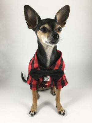 Kenora Summer Shirt - Full Front View of Cute Chihuahua Dog Wearing Shirt with Bowtie. Black and Red Gingham Shirt
