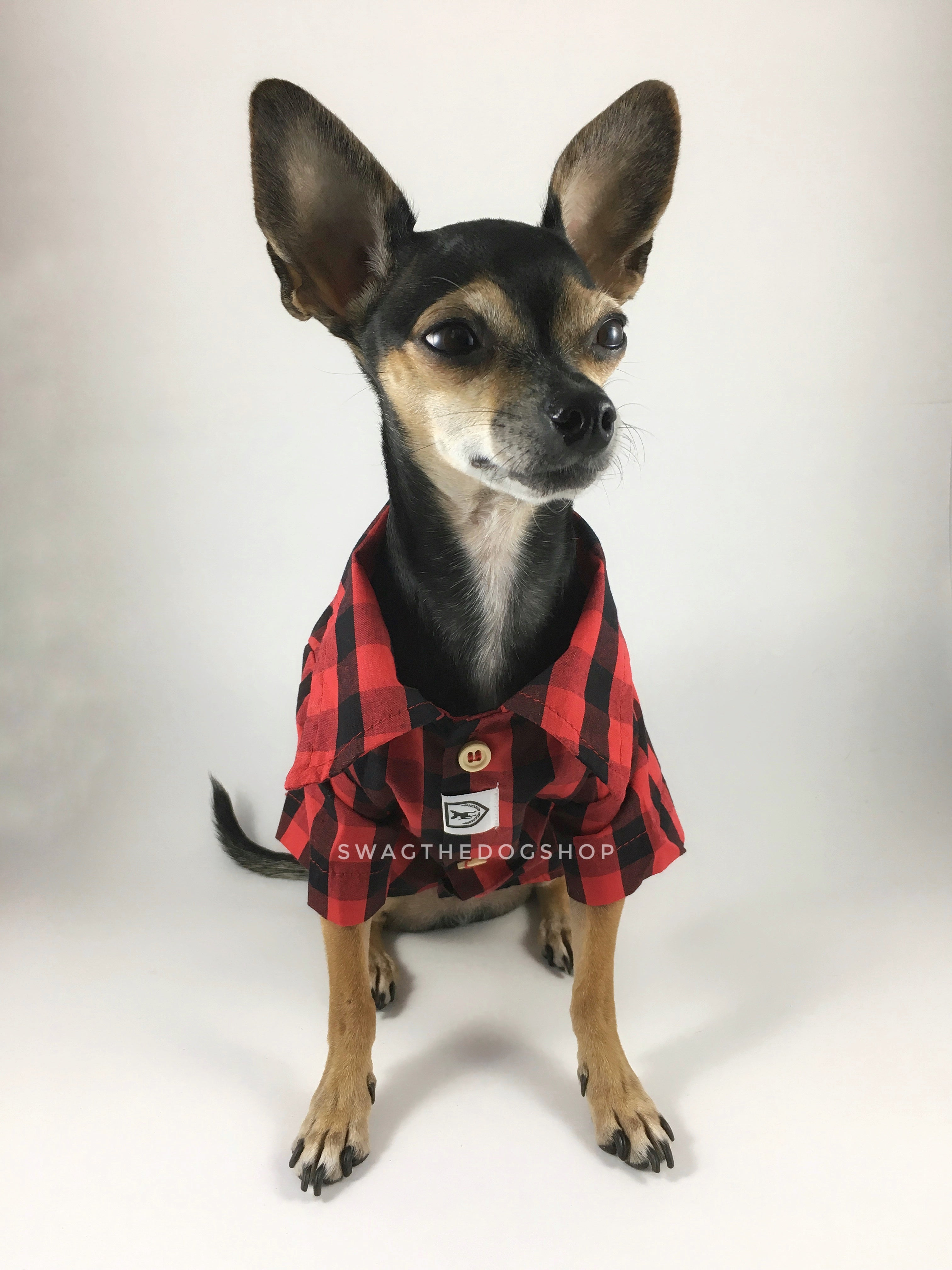 Kenora Summer Shirt - Full Front View of Cute Chihuahua Dog Wearing Shirt. Black and Red Gingham Shirt