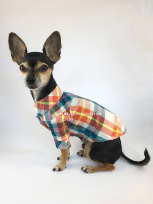 Malibu Sunset Shirt - Side View of Cute Chihuahua Dog Wearing Shirt. Orange, Yellow and Blue Plaid Shirt