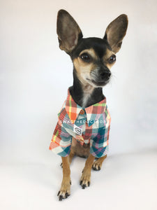 Malibu Sunset Shirt - Full Front View of Cute Chihuahua Dog Wearing Shirt. Orange, Yellow and Blue Plaid Shirt