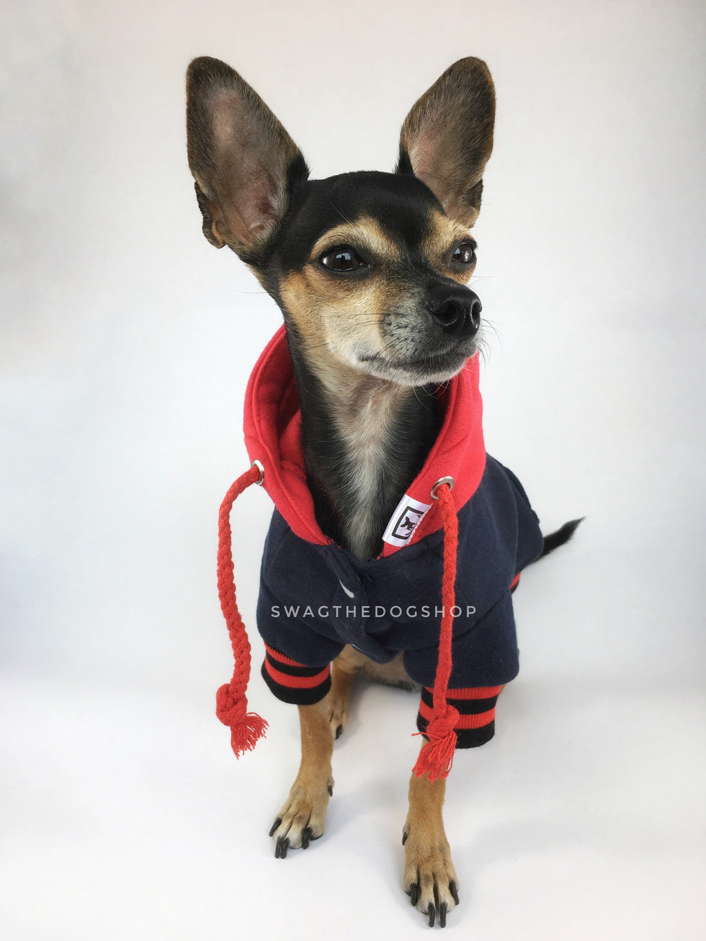 Parklife Navy and Red Sports Hoodie - Full Front View of Cute Chihuahua Dog Wearing Hoodie. Navy and Red Sports Hoodie