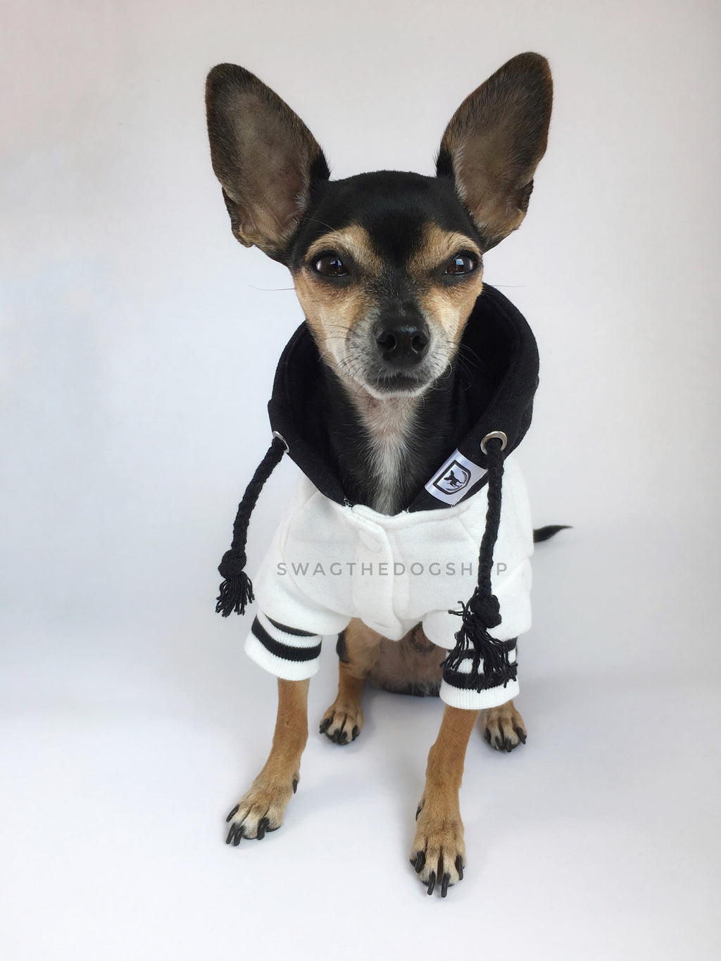 Parklife Black and White Sports Hoodie - Full Front View of Cute Chihuahua Dog Wearing Hoodie. Black and White Sports Hoodie