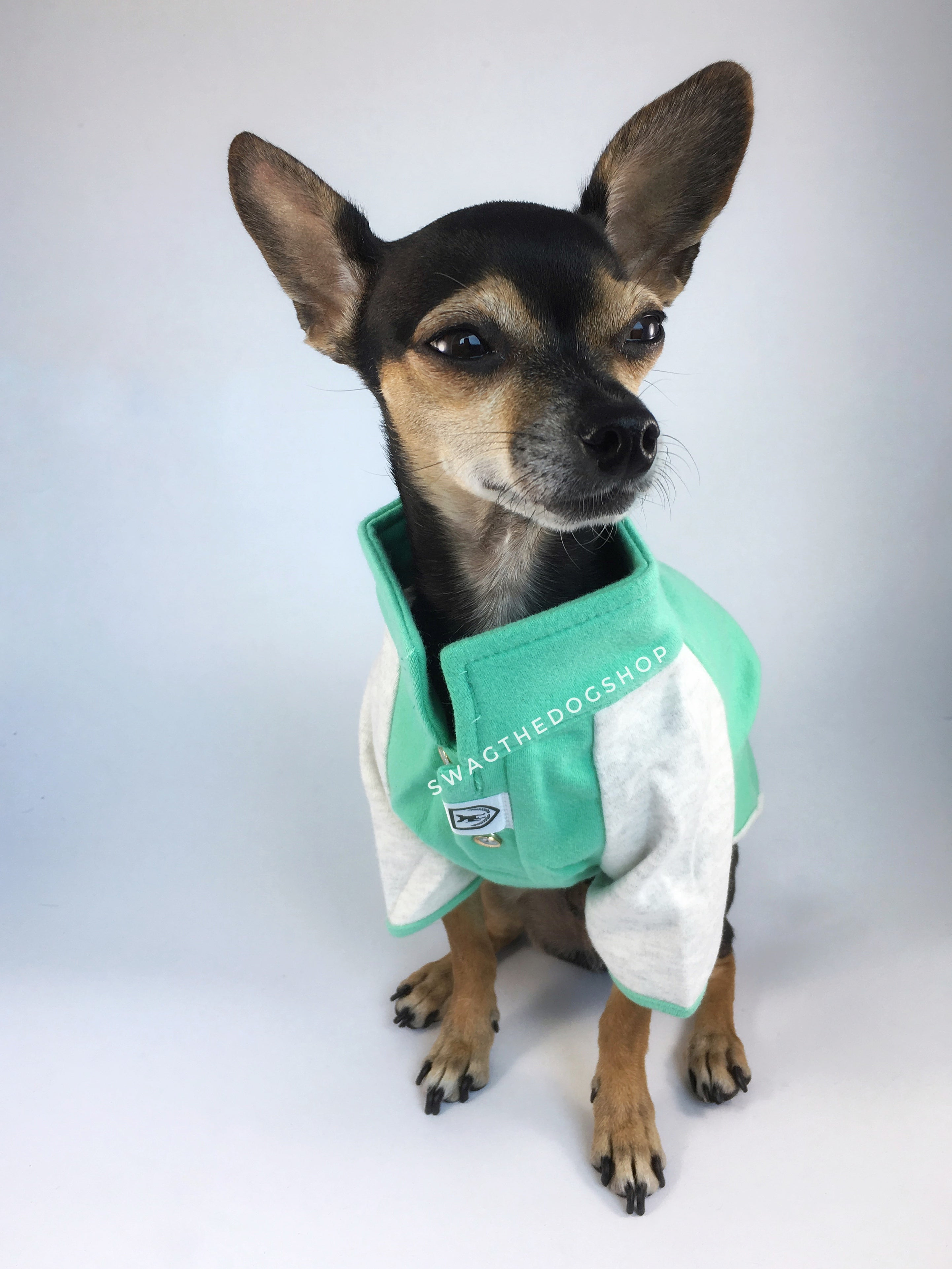 Surfside Emerald Green Polo Shirt - Full Front View of Cute Chihuahua Dog Wearing Shirt. Emerald Green with Light Gray Sleeves Polo Shirt