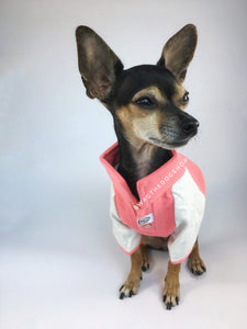 Surfside Salmon Pink Polo Shirt - Full Front View of Cute Chihuahua Dog Wearing Shirt. Salmon Pink with Light Gray Sleeves Polo Shirt