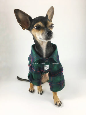 True North Green Plaid Shirt - Full Front View of Cute Chihuahua Dog Wearing Shirt. Green Plaid Shirt