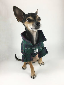 True North Green Plaid Shirt - Full Front View of Cute Chihuahua Dog Wearing Shirt with Sleeves Rolled Up. Green Plaid Shirt
