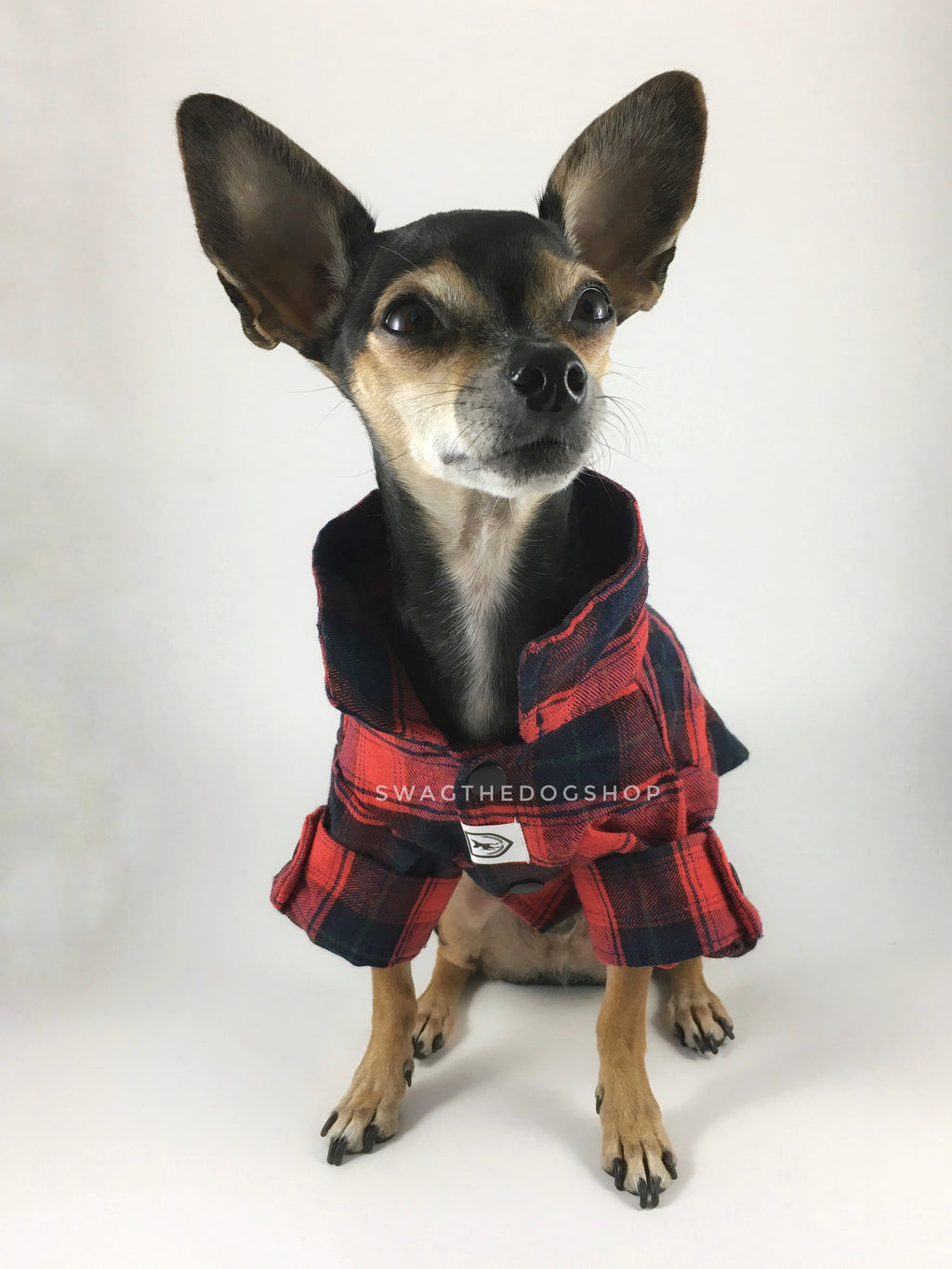 True North Red Plaid Shirt - Full Front View of Cute Chihuahua Dog Wearing Shirt with Sleeves Rolled Up. Red Plaid Shirt