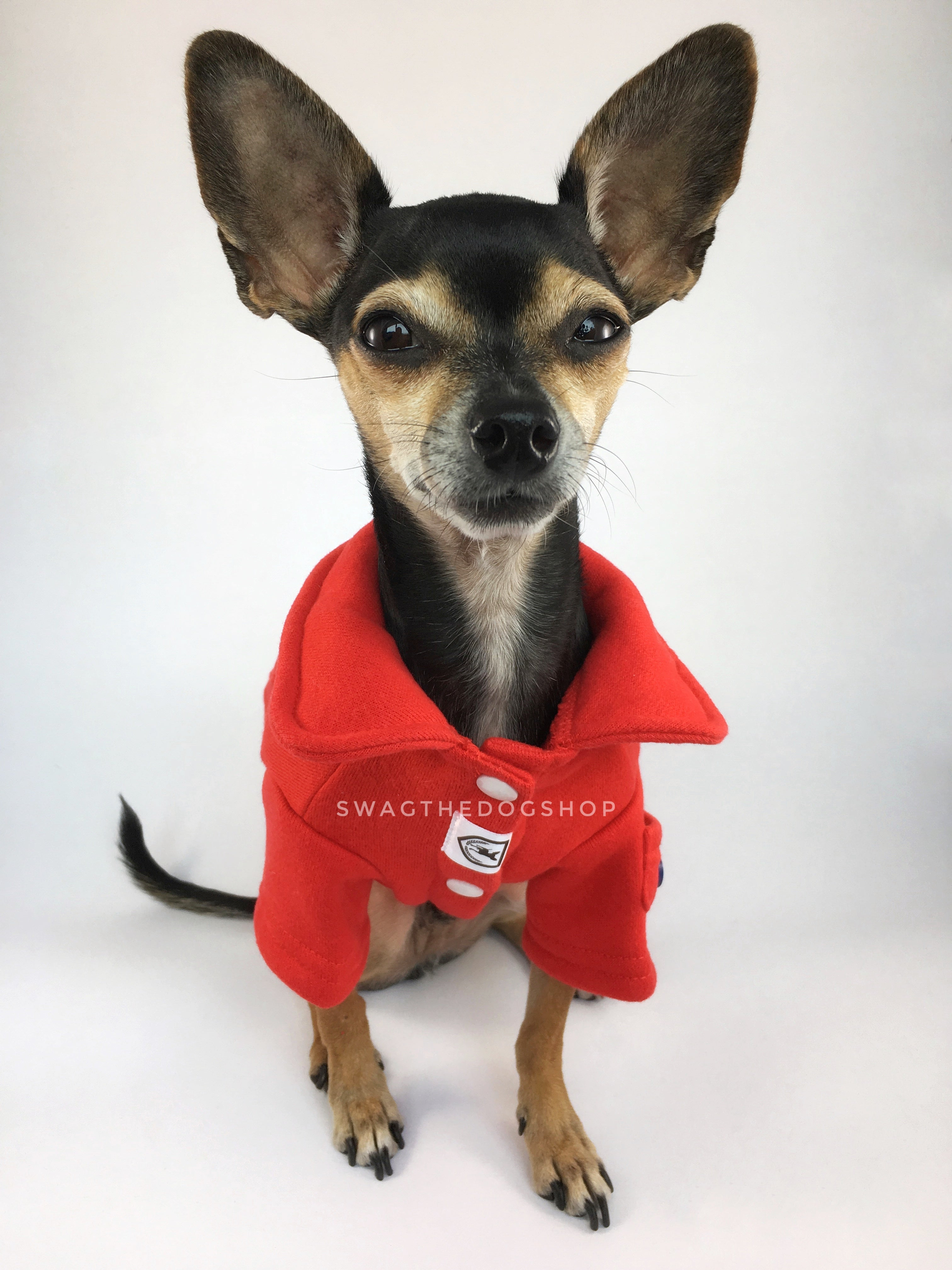 Yachtsman Red Shirt - Full Front View of Cute Chihuahua Dog Wearing Shirt. Red Shirt with Fleece Inside