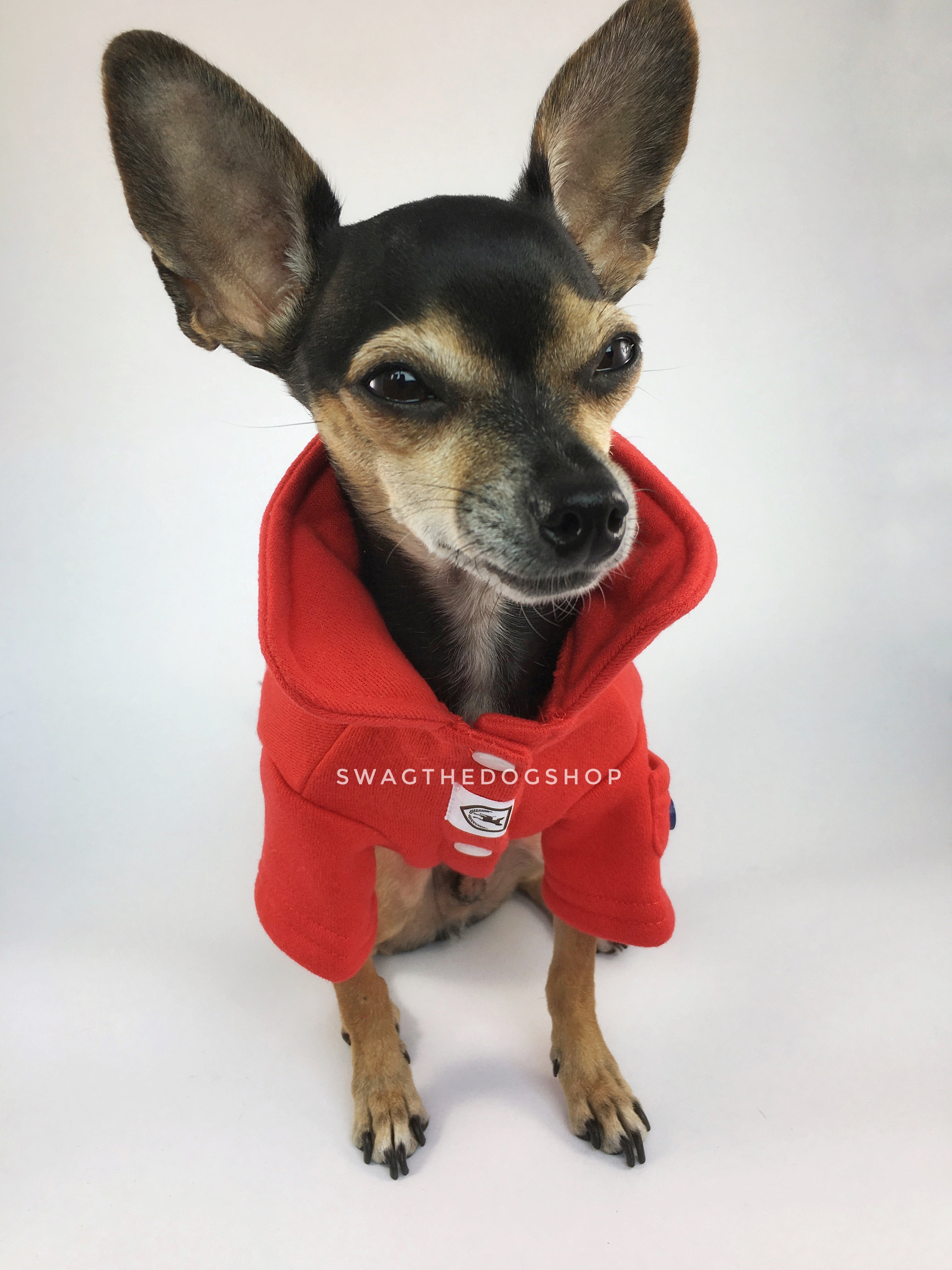 Yachtsman Red Shirt - Full Front View of Cute Chihuahua Dog Wearing Shirt with Collar Up. Red Shirt with Fleece Inside