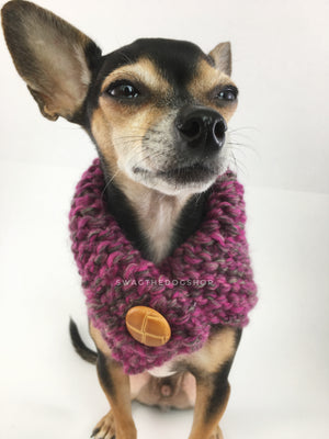 Berries Swagsnood -  Close Up View of Cute Chihuahua Dog Wearing Pink Gray Mixed Color Dog Snood with Accent Button