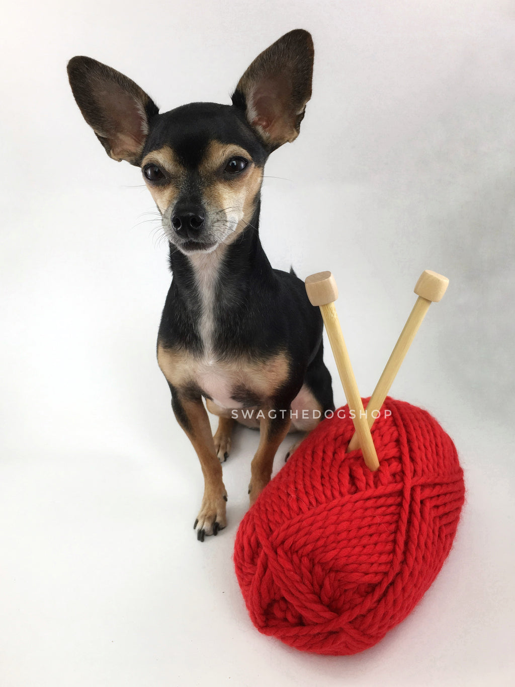 Christmas Red Swagsnood - Yarn with Cute Chihuahua Dog. Bright Red Color Dog Snood with Accent Button