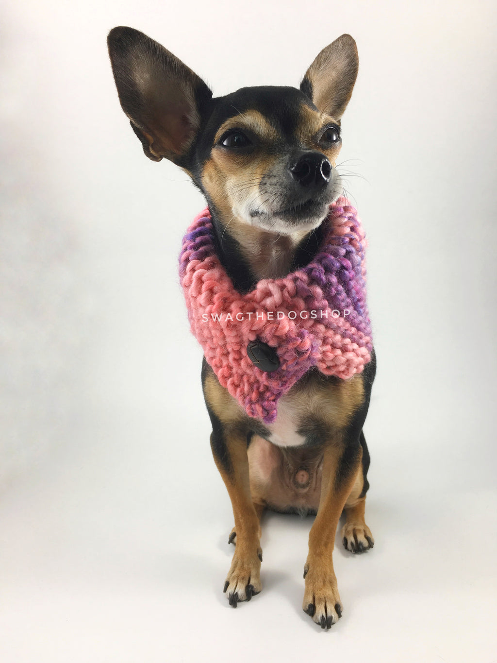 Cotton Candy Swagsnood -  Full Front View of Cute Chihuahua Dog Wearing Mixed Color of Pink, Purple and Salmon Pink Dog Snood with Accent Button