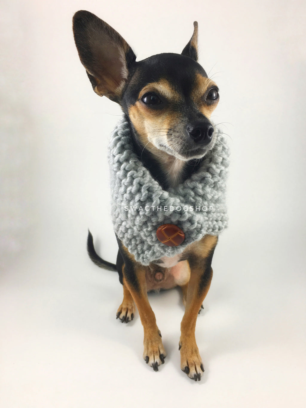 Heather Light Gray Swagsnood - Full Front View of Cute Chihuahua Dog Wearing Heather Light Gray Color Dog Snood  with Accent Button with Accent Button
