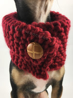 Maroon 7 Swagsnood - Close Up Neck View of Cute Chihuahua Dog Wearing Maroon Color Dog Snood with Accent Button
