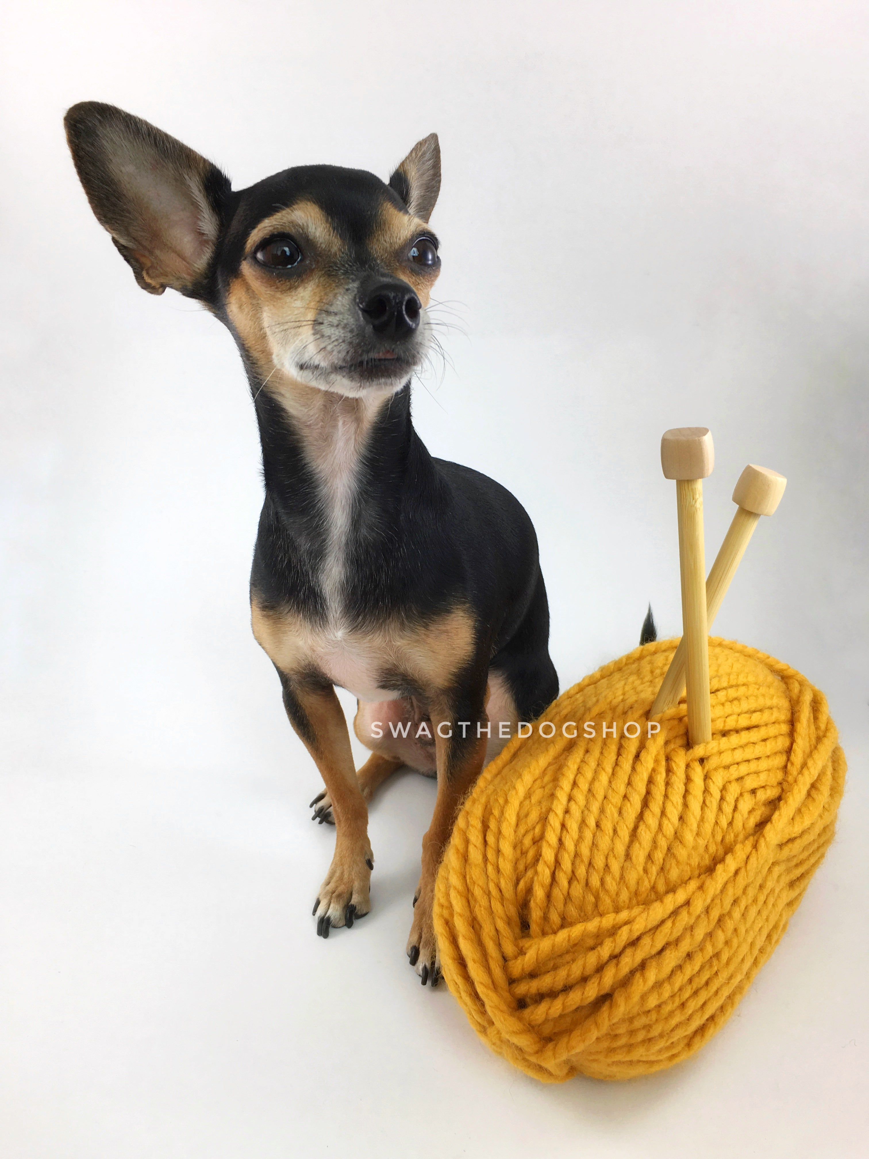 Mustard Yellow Swagsnood - Yarn with Cute Chihuahua Dog. Mustard Yellow Color Dog Snood with Accent Button